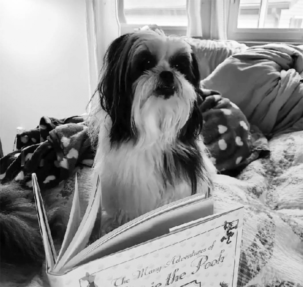 Daizee May and Diesel (pictured), along with a host of other Mazomanie pets, have been reading stories to children on Facebook. Mazomanie Deputy...